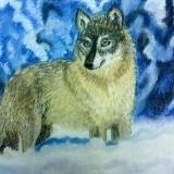 Любимый волк (пастель)