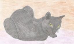 Кошка Бонька